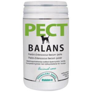 Probalans Pectbalans maitohappobakteerivalmiste 180 g